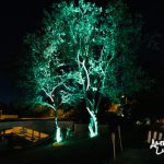 Baum ambient beleuchtet